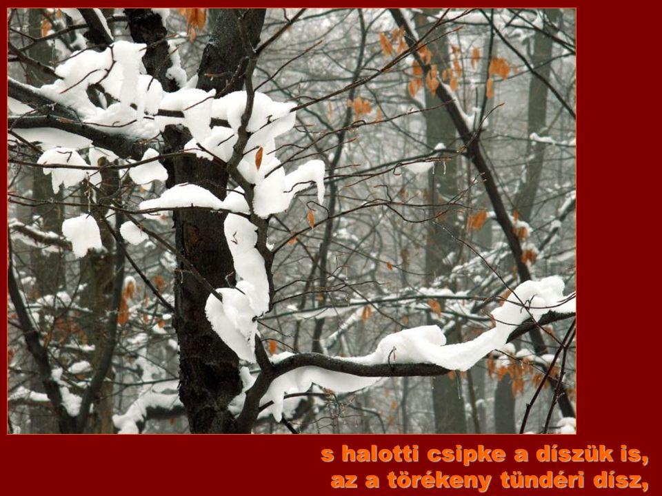 Lombnak, virágnak nyoma sehol, fekete csontváz a fa, a bokor,
