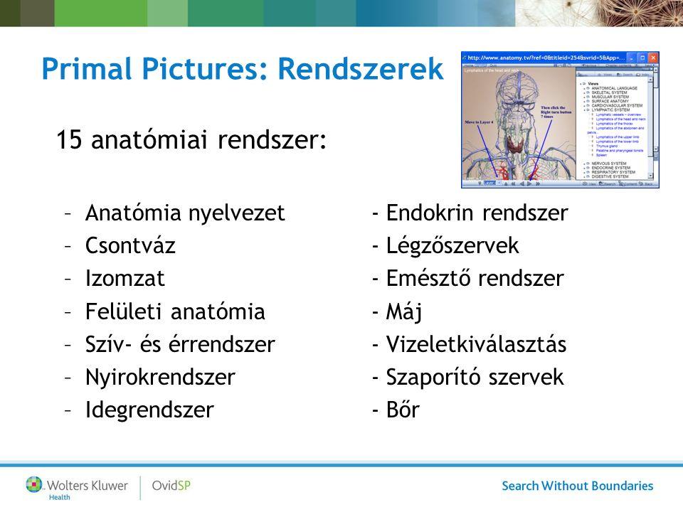 Primal Pictures: Rendszerek 15 anatómiai rendszer: –Anatómia nyelvezet- Endokrin rendszer –Csontváz - Légzőszervek –Izomzat- Emésztő rendszer –Felületi anatómia- Máj –Szív- és érrendszer- Vizeletkiválasztás –Nyirokrendszer- Szaporító szervek –Idegrendszer - Bőr