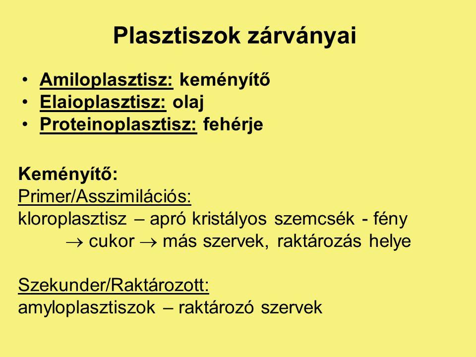 PLASZTISZOK