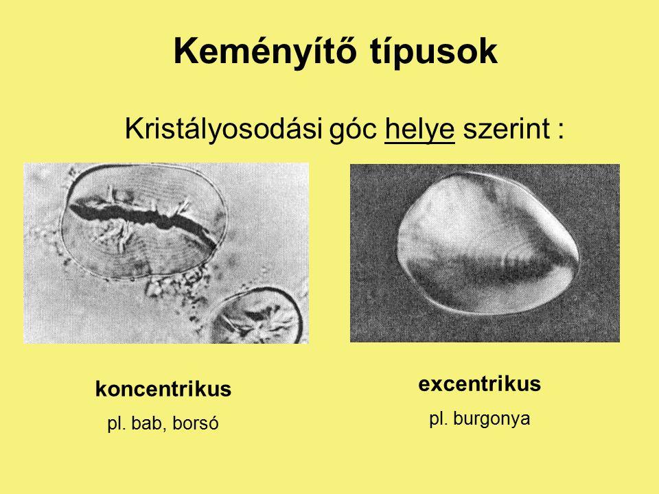 Kloroplasztisz keményítőszemek a kloroplasztiszban