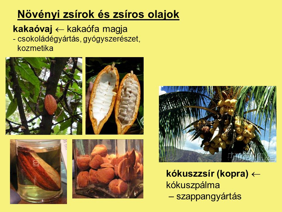 Zsír- és olajzárványok Növényi zsírok és zsíros olajok: emulzióként vagy szemcsék, cseppek formájában a citoplazmában (zsír-, ill.