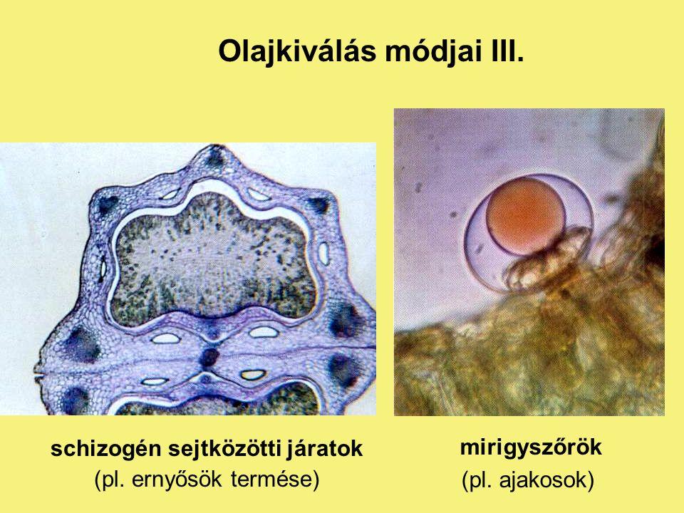 lizigén sejtközötti üregekben (pl. citrom héja) Olajkiválás módjai II.