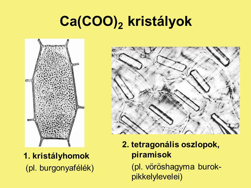 Kristályzárványok : Ca(COO) 2 és CaCO 3 kristályok I.