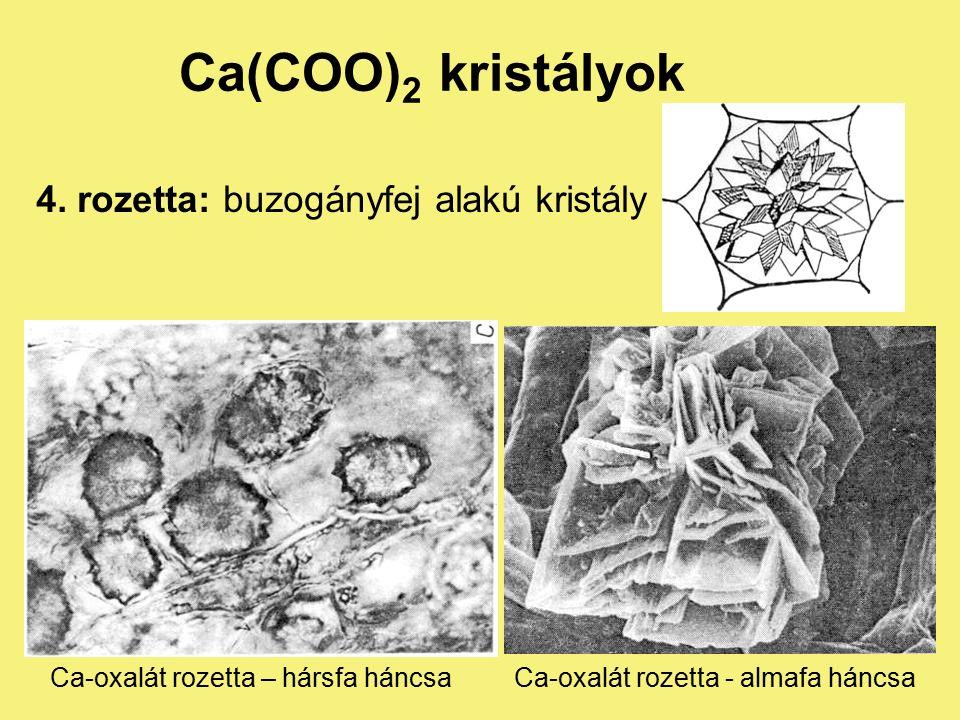 Ca(COO) 2 kristályok 3. rafid: kristálytűk kéveszerű kötege (pl.