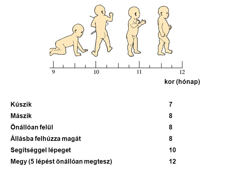kor (hónap) Kúszik7 Mászik8 Önállóan felül8 Állásba felhúzza magát8 Segítséggel lépeget10 Megy (5 lépést önállóan megtesz)12
