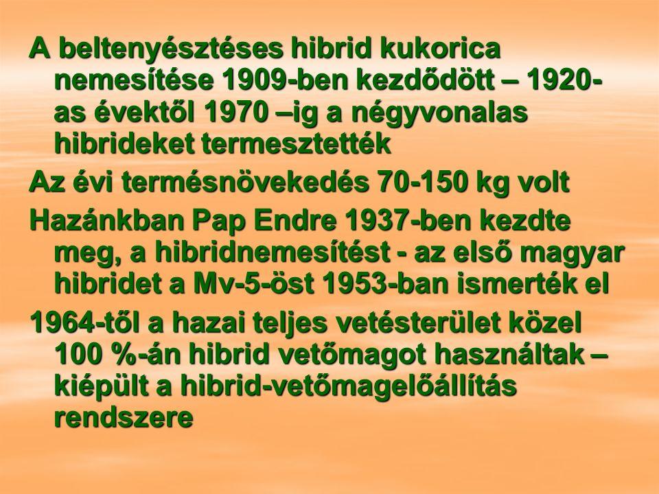 A beltenyésztéses hibrid kukorica nemesítése 1909-ben kezdődött – 1920- as évektől 1970 –ig a négyvonalas hibrideket termesztették Az évi termésnövekedés 70-150 kg volt Hazánkban Pap Endre 1937-ben kezdte meg, a hibridnemesítést - az első magyar hibridet a Mv-5-öst 1953-ban ismerték el 1964-től a hazai teljes vetésterület közel 100 %-án hibrid vetőmagot használtak – kiépült a hibrid-vetőmagelőállítás rendszere
