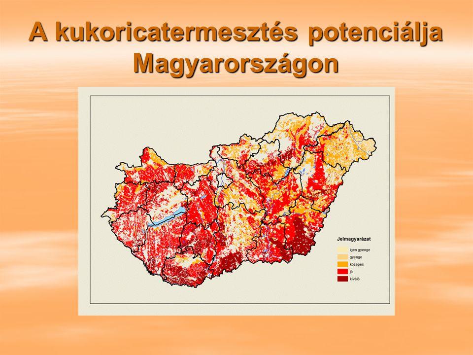 A kukoricatermesztés potenciálja Magyarországon