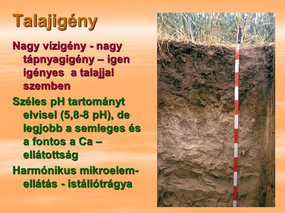 Talajigény Nagy vízigény - nagy tápnyagigény – igen igényes a talajjal szemben Széles pH tartományt elvisel (5,8-8 pH), de legjobb a semleges és a fontos a Ca – ellátottság Harmónikus mikroelem- ellátás - istállótrágya
