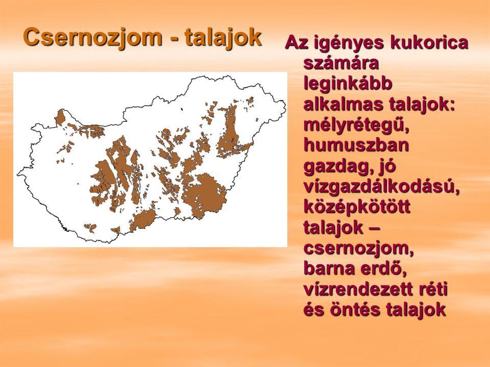 Csernozjom - talajok Az igényes kukorica számára leginkább alkalmas talajok: mélyrétegű, humuszban gazdag, jó vízgazdálkodású, középkötött talajok – csernozjom, barna erdő, vízrendezett réti és öntés talajok