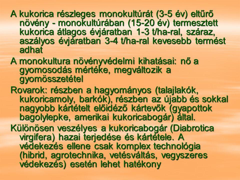 A kukorica részleges monokultúrát (3-5 év) eltűrő növény - monokultúrában (15-20 év) termesztett kukorica átlagos évjáratban 1-3 t/ha-ral, száraz, aszályos évjáratban 3-4 t/ha-ral kevesebb termést adhat A monokultura növényvédelmi kihatásai: nő a gyomosodás mértéke, megváltozik a gyomösszetétel Rovarok: részben a hagyományos (talajlakók, kukoricamoly, barkók), részben az újabb és sokkal nagyobb kártételt előidéző kártevők (gyapottok bagolylepke, amerikai kukoricabogár) által.