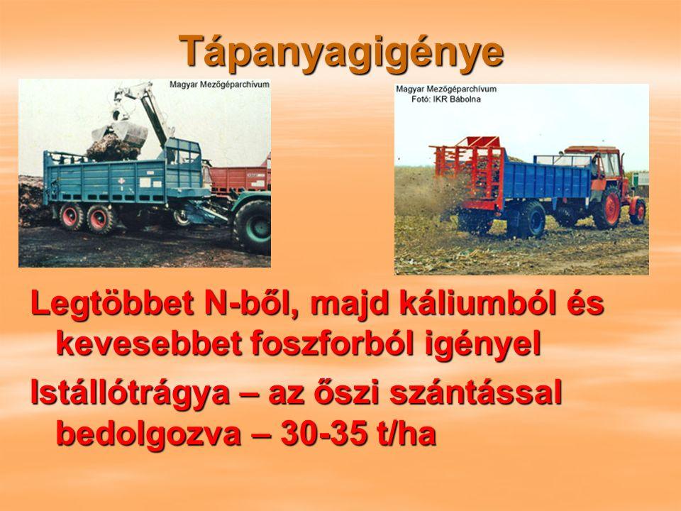 Tápanyagigénye Legtöbbet N-ből, majd káliumból és kevesebbet foszforból igényel Istállótrágya – az őszi szántással bedolgozva – 30-35 t/ha