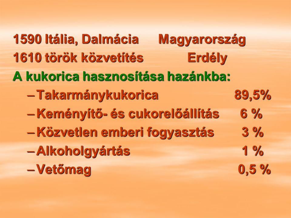 1590 Itália, DalmáciaMagyarország 1610 török közvetítésErdély A kukorica hasznosítása hazánkba: –Takarmánykukorica 89,5% –Keményítő- és cukorelőállítás 6 % –Közvetlen emberi fogyasztás 3 % –Alkoholgyártás 1 % –Vetőmag 0,5 %