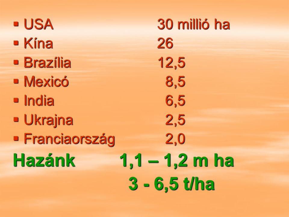  USA30 millió ha  Kína26  Brazília12,5  Mexicó 8,5  India 6,5  Ukrajna 2,5  Franciaország 2,0 Hazánk 1,1 – 1,2 m ha 3 - 6,5 t/ha