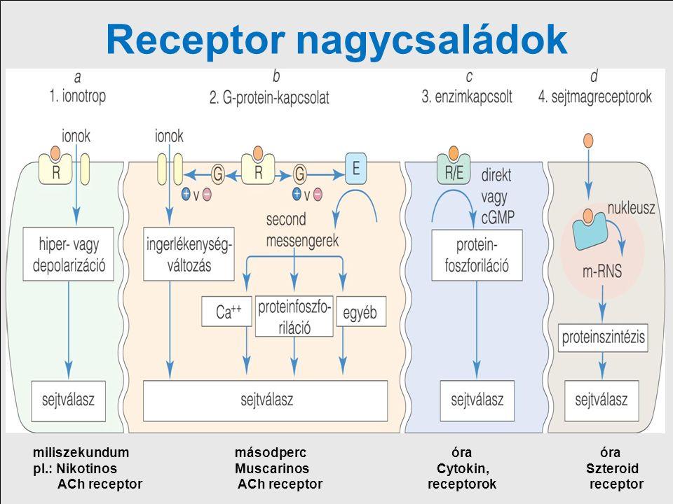 Receptor nagycsaládok 1.Ligand függő ioncsatorna ( ionotrop) receptorok 2.