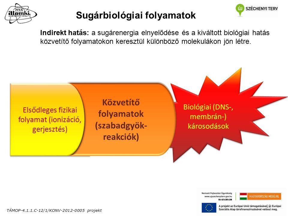 TÁMOP-4.1.1.C-12/1/KONV-2012-0005 projekt 10 Indirekt hatás: a sugárenergia elnyelődése és a kiváltott biológiai hatás közvetítő folyamatokon keresztül különböző molekulákon jön létre.