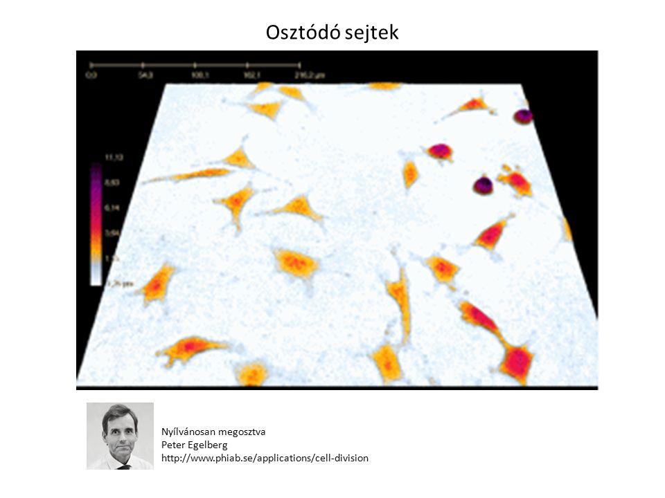 Osztódó sejtek Nyílvánosan megosztva Peter Egelberg http://www.phiab.se/applications/cell-division