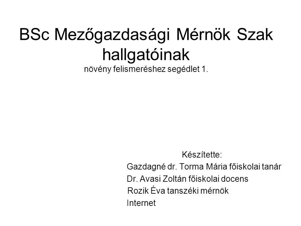 BSc Mezőgazdasági Mérnök Szak hallgatóinak növény felismeréshez segédlet 1. Készítette: Gazdagné dr. Torma Mária főiskolai tanár Dr. Avasi Zoltán főis