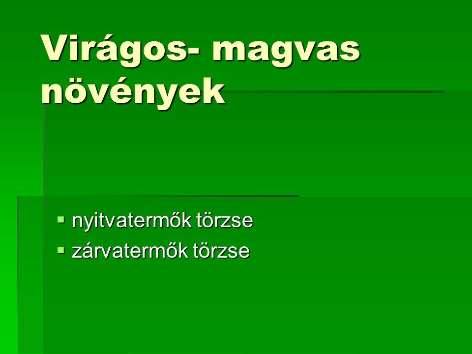 A nyitvatermők csoportjai (osztályai): 1.Magvaspáfrányok: kihaltak (250 mó.