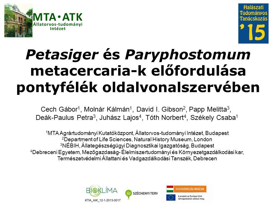 Petasiger és Paryphostomum metacercaria-k előfordulása pontyfélék oldalvonalszervében Cech Gábor 1, Molnár Kálmán 1, David I.