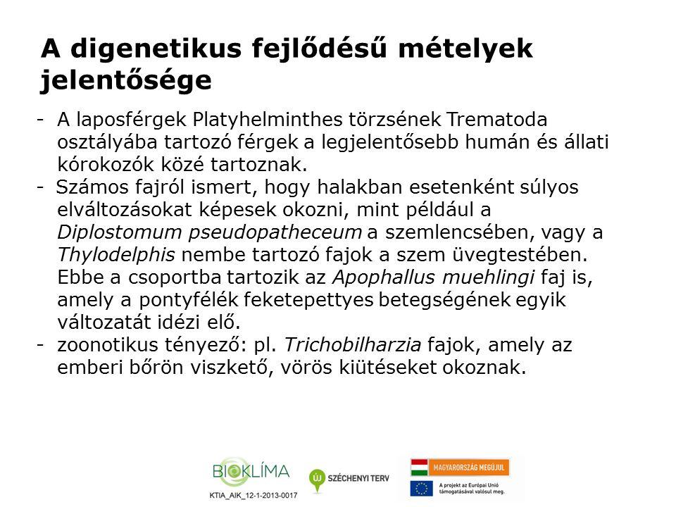 A digenetikus fejlődésű mételyek jelentősége -A laposférgek Platyhelminthes törzsének Trematoda osztályába tartozó férgek a legjelentősebb humán és ál
