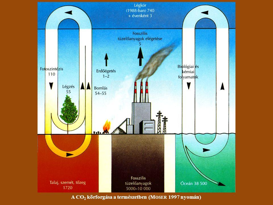 A CO 2 körforgása a természetben (M OSER 1997 nyomán)