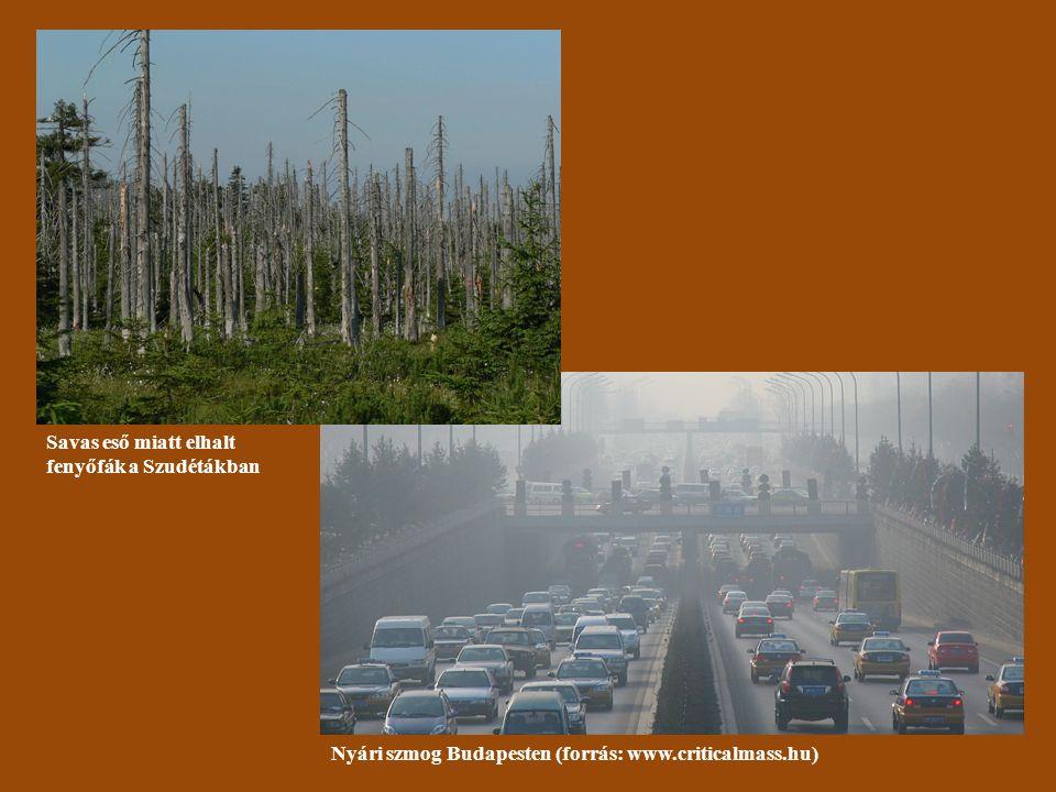 2. Savasodás A savas eső hatása a növényzetre (M OSER 1997 nyomán)