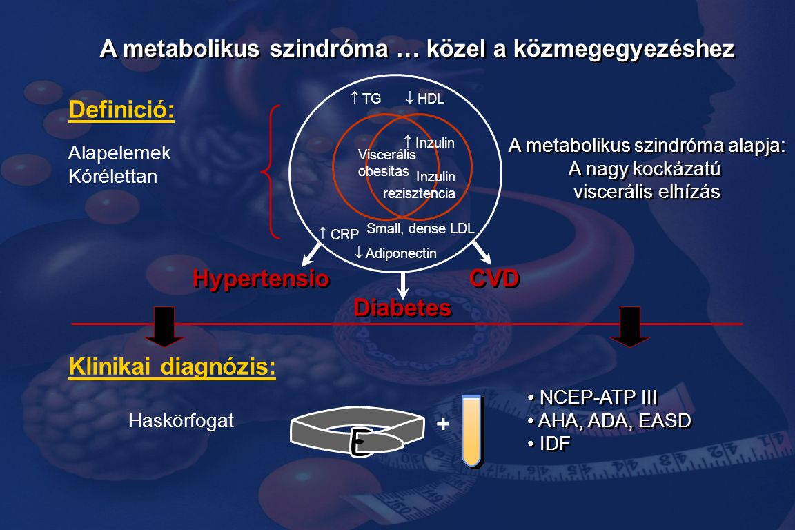 A metabolikus szindróma … közel a közmegegyezéshez Viscerális obesitas Inzulin rezisztencia  Inzulin  TG  HDL  Adiponectin Small, dense LDL  CRP Alapelemek Kórélettan A metabolikus szindróma alapja: A nagy kockázatú viscerális elhízás A metabolikus szindróma alapja: A nagy kockázatú viscerális elhízás CVD Diabetes Hypertensio Definició: Haskörfogat + NCEP-ATP III AHA, ADA, EASD IDF NCEP-ATP III AHA, ADA, EASD IDF Klinikai diagnózis: