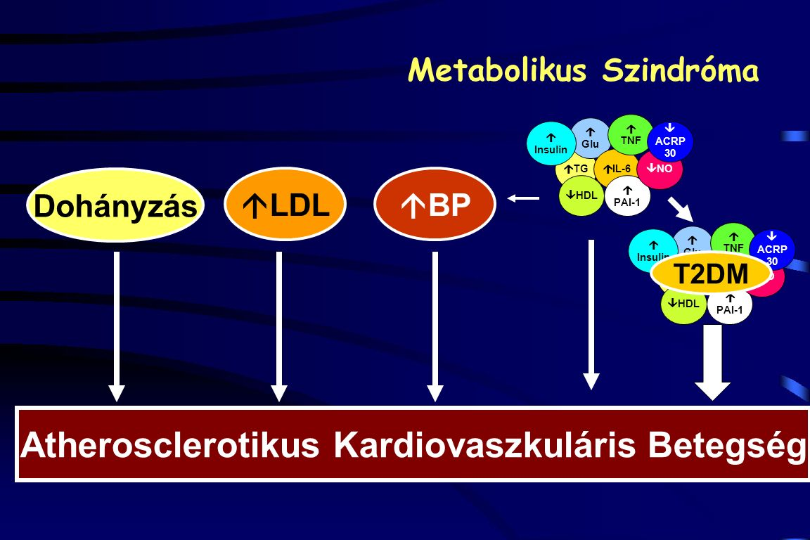 Dohányzás  LDL  BP Atherosclerotikus Kardiovaszkuláris Betegség Metabolikus Szindróma  TG  Glu  IL-6  HDL  PAI-1  TNF  NO  Insulin  ACRP 30  TG  Glu  IL-6  HDL  PAI-1  TNF  NO  Insulin  ACRP 30 T2DM