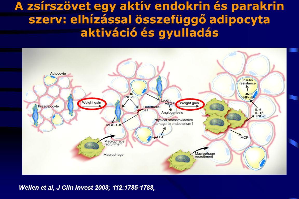 A zsírszövet egy aktív endokrin és parakrin szerv: elhízással összefüggő adipocyta aktiváció és gyulladás Wellen et al, J Clin Invest 2003; 112:1785-1