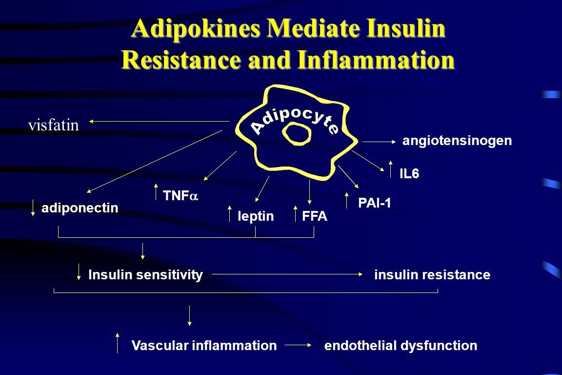 IL6 PAI-1 TNF  adiponectin leptin Insulin sensitivityinsulin resistance Vascular inflammationendothelial dysfunction Adipokines Mediate Insulin Resistance and Inflammation angiotensinogen FFA visfatin