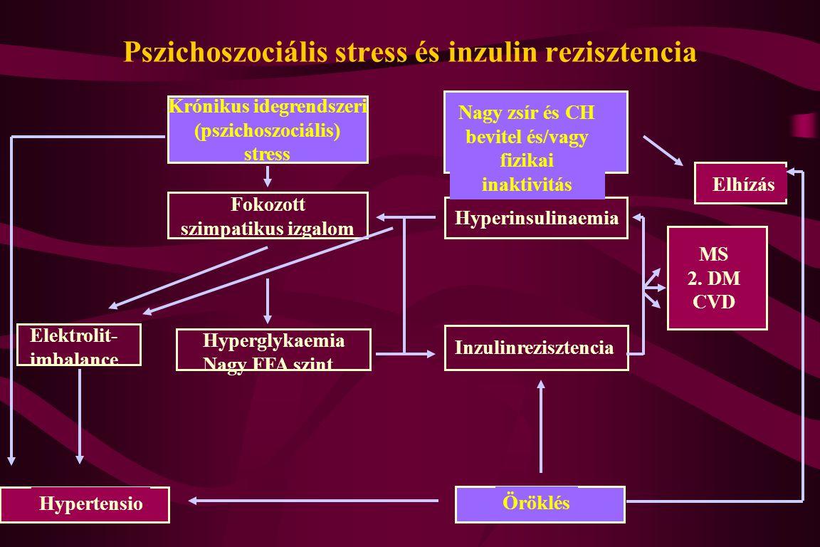 Pszichoszociális stress és inzulin rezisztencia Inzulinrezisztencia Hyperinsulinaemia Nagy zsír és CH bevitel és/vagy fizikai inaktivitás Elhízás Fokozott szimpatikus izgalom Elektrolit- imbalance Hypertensio Öröklés Krónikus idegrendszeri (pszichoszociális) stress Hyperglykaemia Nagy FFA szint MS 2.