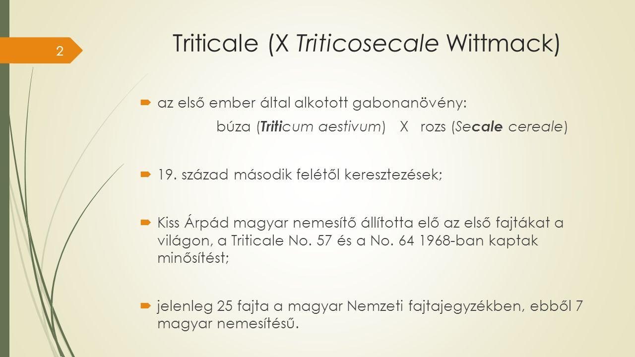 Triticale (X Triticosecale Wittmack)  az első ember által alkotott gabonanövény: búza ( Triti cum aestivum) X rozs (Se cale cereale)  19.