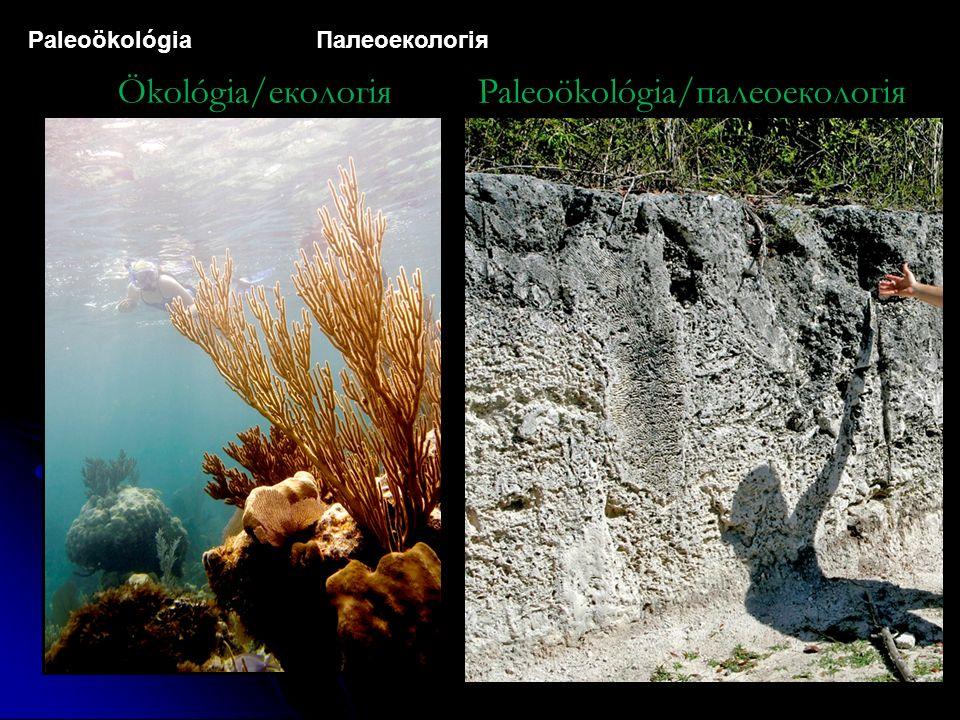 Paleoökológia Палеоекологія Ökológia/екологіяPaleoökológia/палеоекологія