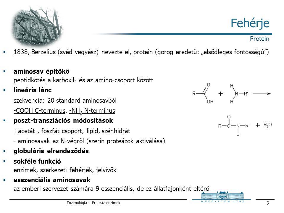 """Enzimológia – Proteáz enzimek 2 Fehérje  1838, Berzelius (svéd vegyész) nevezte el, protein (görög eredetű: """"elsődleges fontosságú )  aminosav építőkő peptidkötés a karboxil- és az amino-csoport között  lineáris lánc szekvencia: 20 standard aminosavból -COOH C-terminus, -NH 2 N-terminus  poszt-transzlációs módosítások +acetát-, foszfát-csoport, lipid, szénhidrát - aminosavak az N-végről (szerin proteázok aktiválása)  globuláris elrendeződés  sokféle funkció enzimek, szerkezeti fehérjék, jelvivők  esszenciális aminosavak az emberi szervezet számára 9 esszenciális, de ez állatfajonként eltérő Protein"""