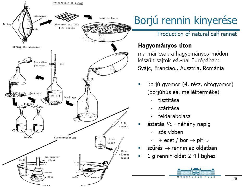 2010Enzimológia – Proteáz enzimek 28 Borjú rennin kinyerése Production of natural calf rennet Hagyományos úton ma már csak a hagyományos módon készült sajtok eá.-nál Európában: Svájc, Franciao., Ausztria, Románia  borjú gyomor (4.