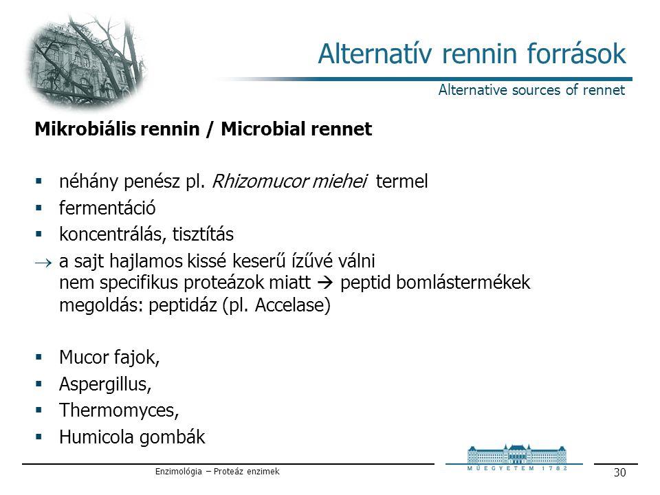 Enzimológia – Proteáz enzimek 30 Alternatív rennin források Alternative sources of rennet Mikrobiális rennin / Microbial rennet  néhány penész pl.