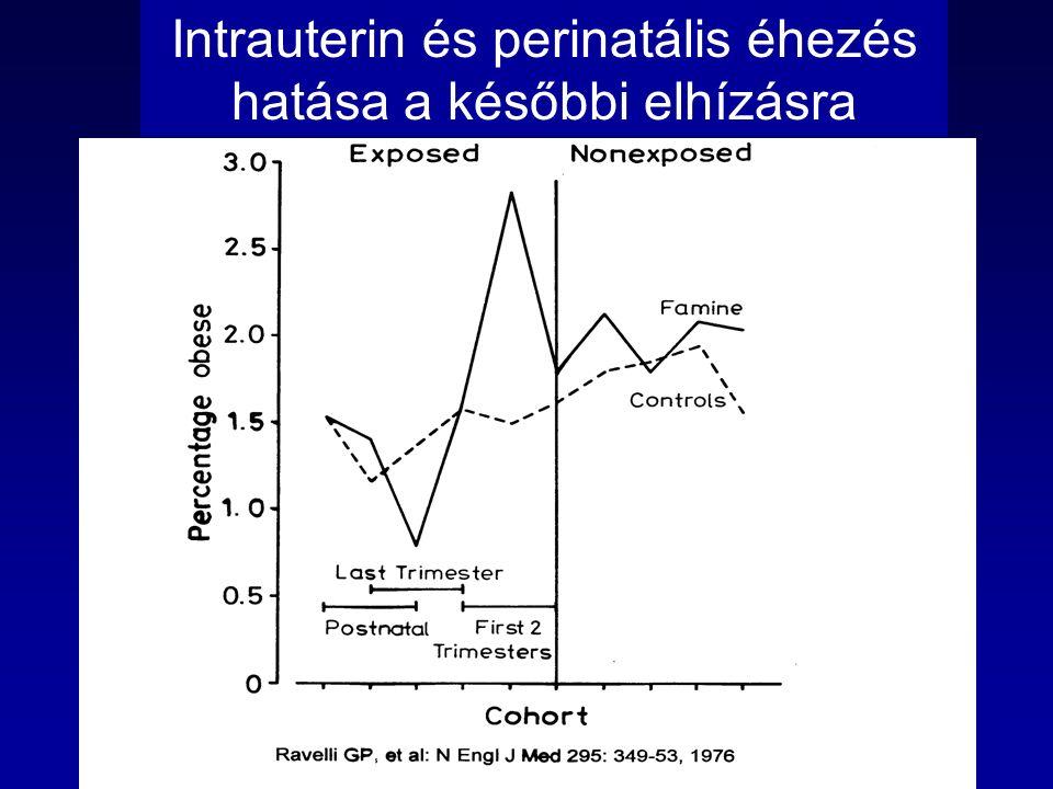 Intrauterin és perinatális éhezés hatása a későbbi elhízásra