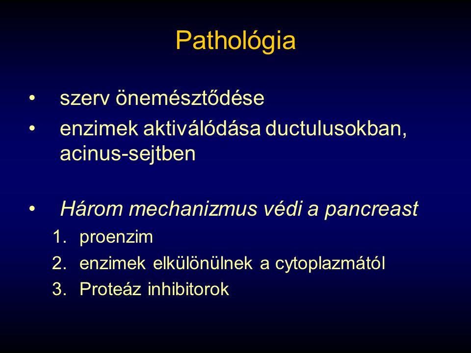 Pathológia szerv önemésztődése enzimek aktiválódása ductulusokban, acinus-sejtben Három mechanizmus védi a pancreast 1.proenzim 2.enzimek elkülönülnek a cytoplazmától 3.Proteáz inhibitorok