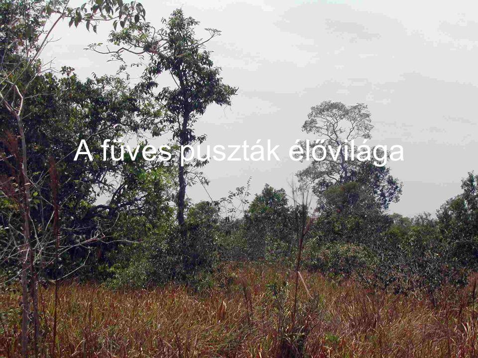 A füves puszták élővilága