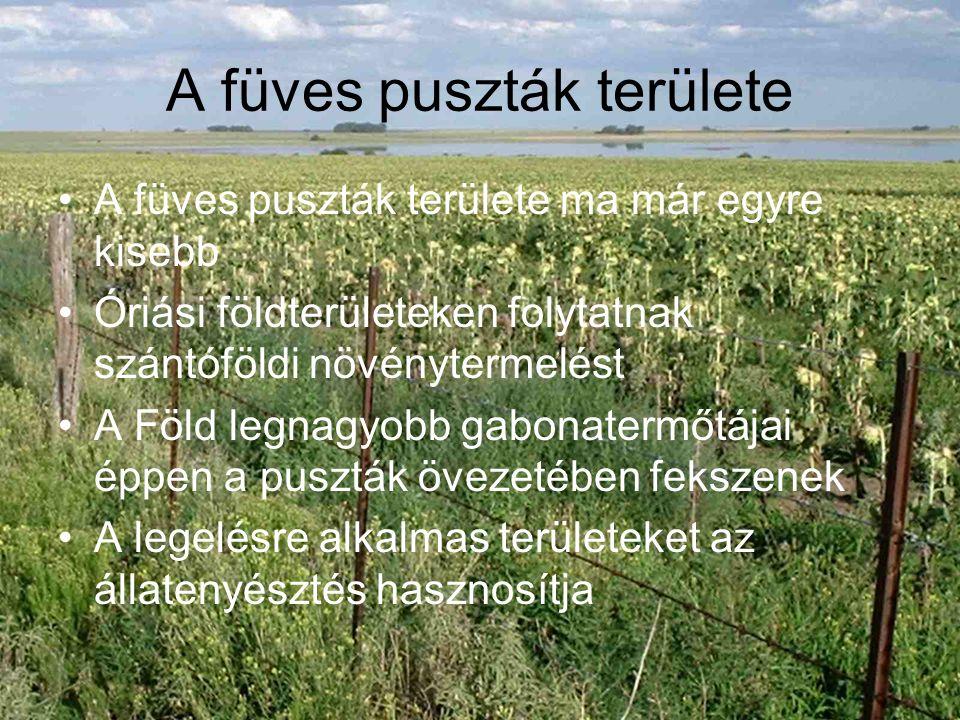 A füves puszták területe A füves puszták területe ma már egyre kisebb Óriási földterületeken folytatnak szántóföldi növénytermelést A Föld legnagyobb gabonatermőtájai éppen a puszták övezetében fekszenek A legelésre alkalmas területeket az állatenyésztés hasznosítja