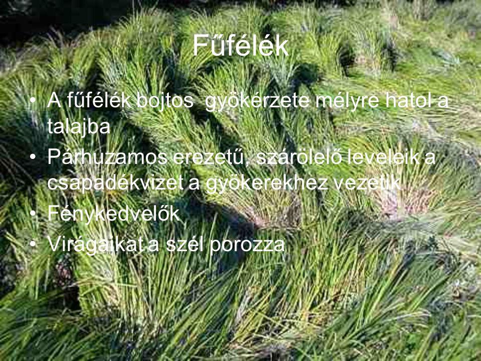 Fűfélék A fűfélék bojtos gyökérzete mélyre hatol a talajba Párhuzamos erezetű, szárölelő leveleik a csapadékvizet a gyökerekhez vezetik Fénykedvelők Virágaikat a szél porozza