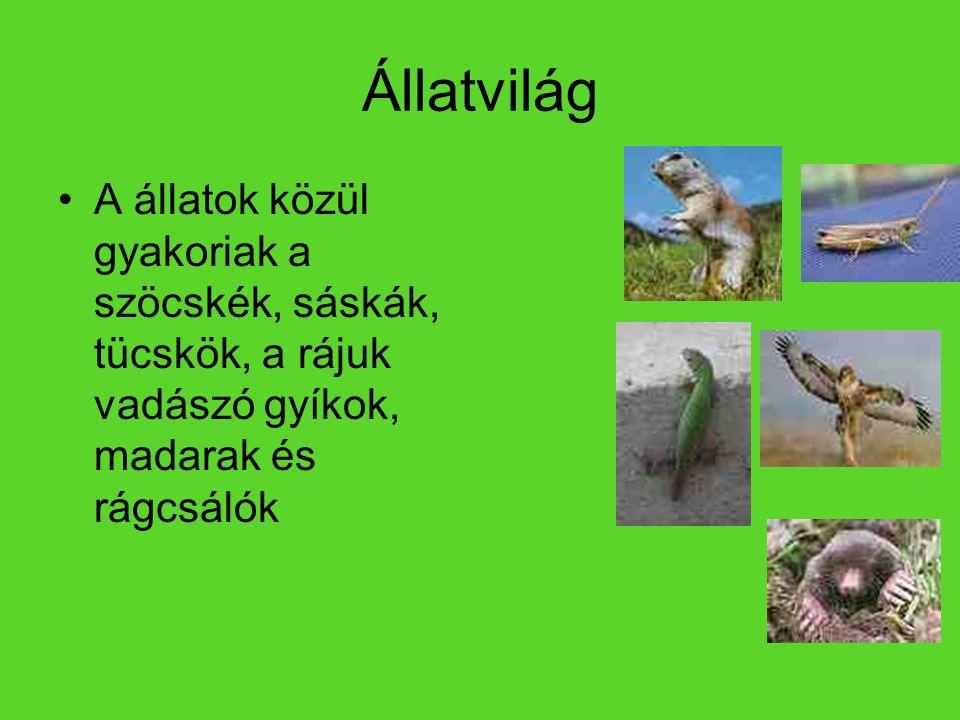 Állatvilág A állatok közül gyakoriak a szöcskék, sáskák, tücskök, a rájuk vadászó gyíkok, madarak és rágcsálók