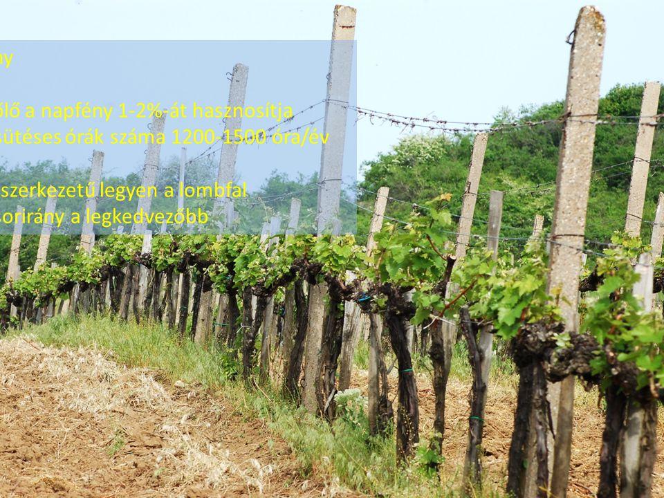A fény A szőlő a napfény 1-2%-át hasznosítja Napsütéses órák száma 1200-1500 óra/év Laza szerkezetű legyen a lombfal É-D sorirány a legkedvezőbb