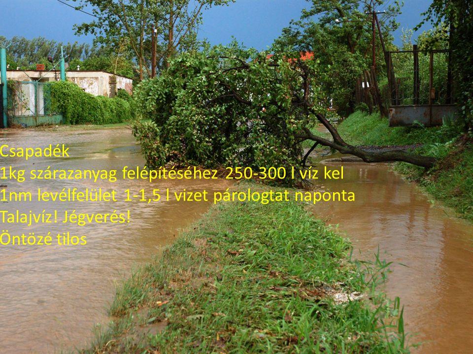 Csapadék 1kg szárazanyag felépítéséhez 250-300 l víz kel 1nm levélfelület 1-1,5 l vizet párologtat naponta Talajvíz.
