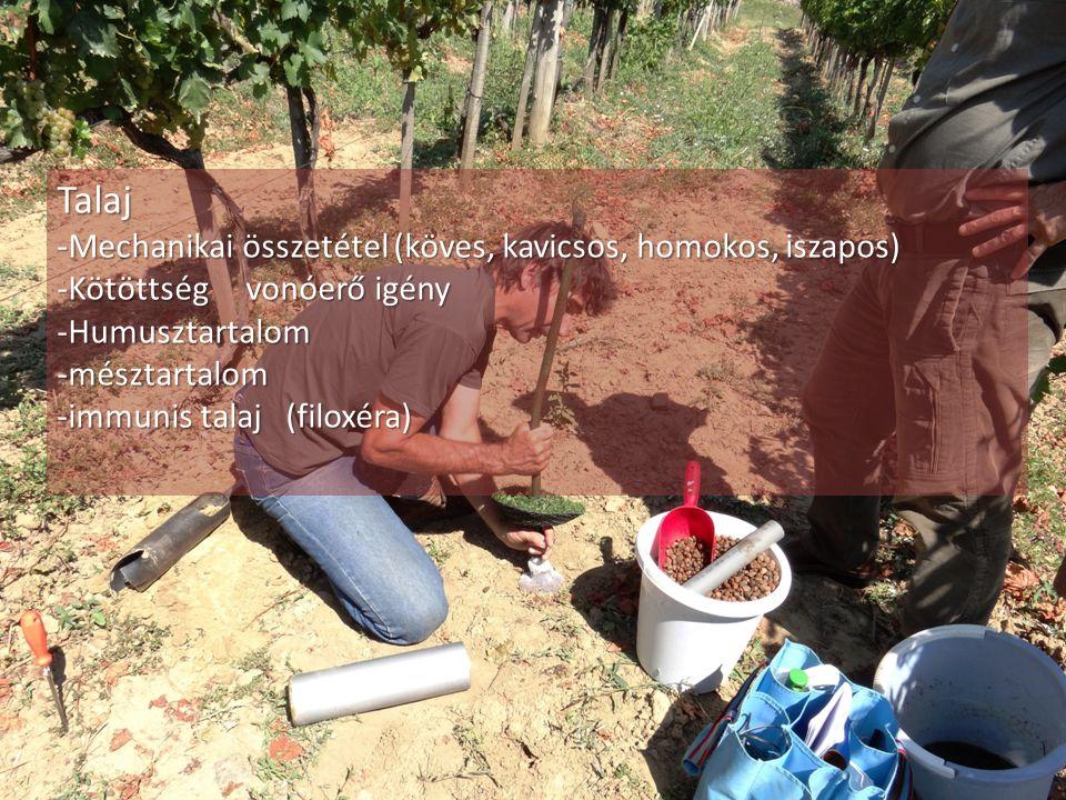 Talaj -Mechanikai összetétel (köves, kavicsos, homokos, iszapos) -Kötöttség vonóerő igény -Humusztartalom-mésztartalom -immunis talaj (filoxéra)