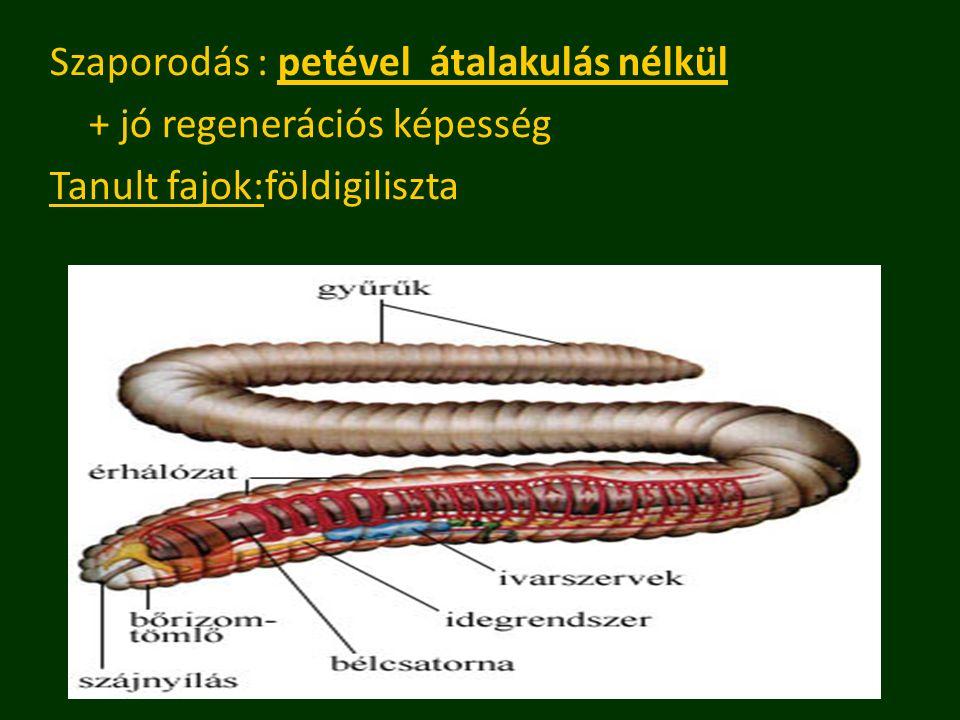 Szaporodás : petével átalakulás nélkül + jó regenerációs képesség Tanult fajok:földigiliszta