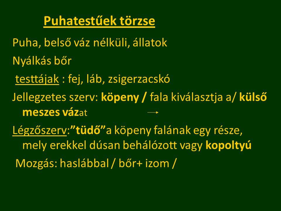 Puhatestűek törzse Puha, belső váz nélküli, állatok Nyálkás bőr testtájak : fej, láb, zsigerzacskó Jellegzetes szerv: köpeny / fala kiválasztja a/ kül