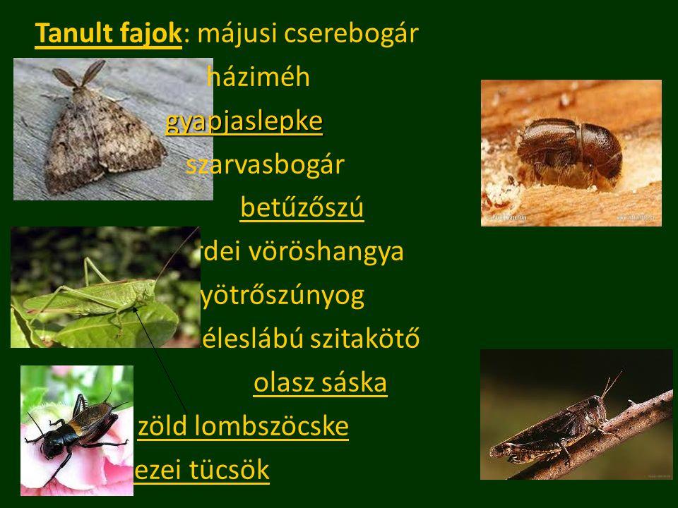 Tanult fajok: májusi cserebogár háziméh gyapjaslepke szarvasbogár betűzőszú erdei vöröshangya gyötrőszúnyog széleslábú szitakötő olasz sáska zöld lomb