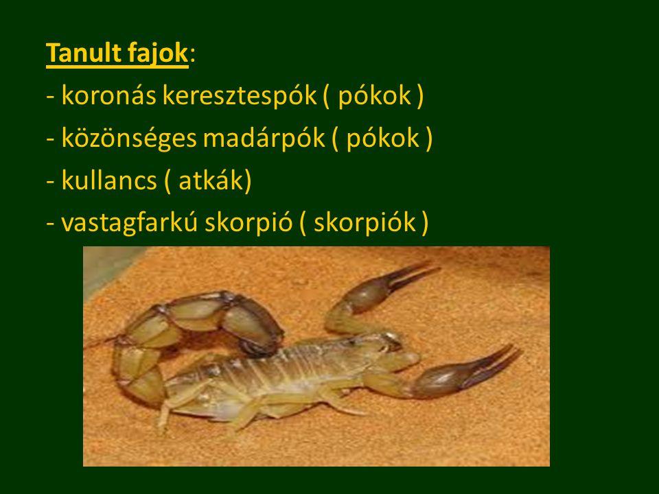 Tanult fajok: - koronás keresztespók ( pókok ) - közönséges madárpók ( pókok ) - kullancs ( atkák) - vastagfarkú skorpió ( skorpiók )