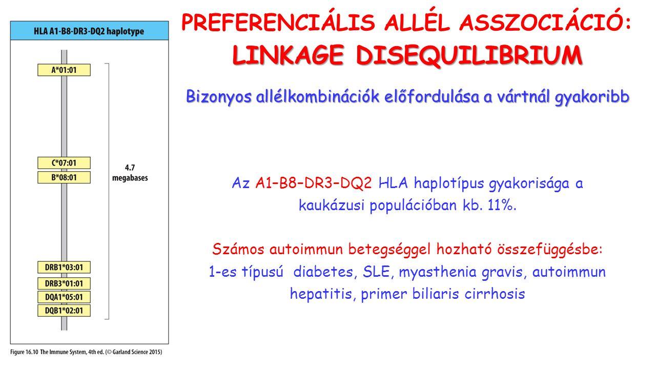 PREFERENCIÁLIS ALLÉL ASSZOCIÁCIÓ: LINKAGE DISEQUILIBRIUM Bizonyos allélkombinációk előfordulása a vártnál gyakoribb Az A1–B8–DR3–DQ2 HLA haplotípus gyakorisága a kaukázusi populációban kb.